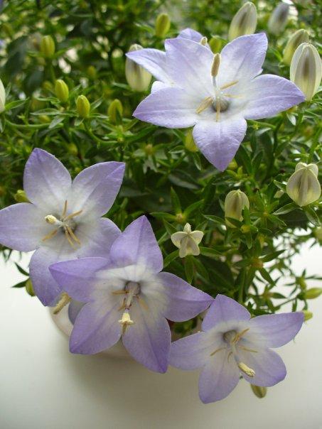 хорошее универсальное удобрение для комнатных растений