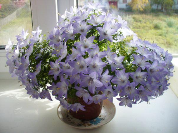цветы в напольной вазе в интерьере квартиры фото