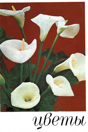 В. Г. Жоголева, С. Н. Приходько и др. «Цветы. Комнатные растения и декоративные кустарники.»