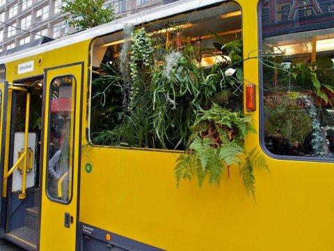 Сад в трамвае