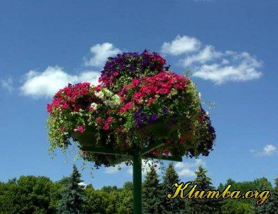 Клумбы Киева