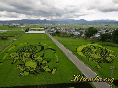 Рисунки на рисовых полях