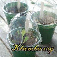 Семенное размножение растений.