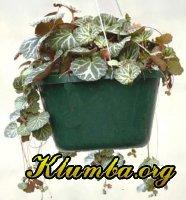 Вегетативное размножение растений.