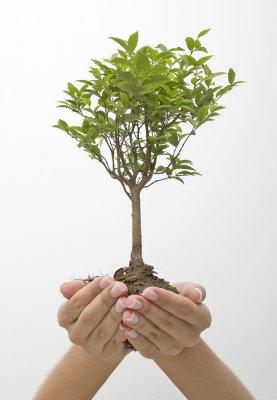 Формирование внешнего вида растения