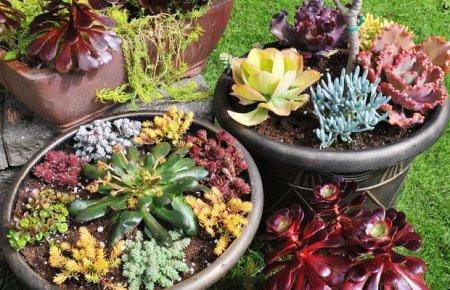 Воздух в жизни растений