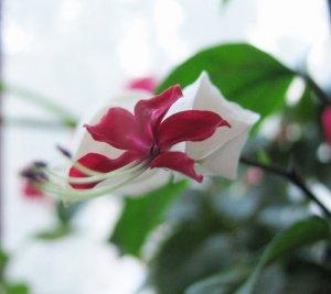 Оригинальные и простые в уходе комнатные растения